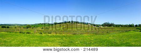 Panoramic Barossa