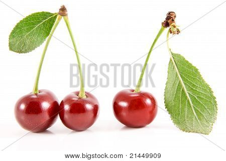 Three Cherry Fruits With Leaves.