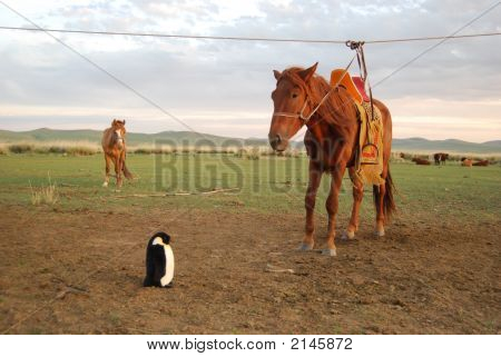 Pepe The Penguin And The Mongolian Horse