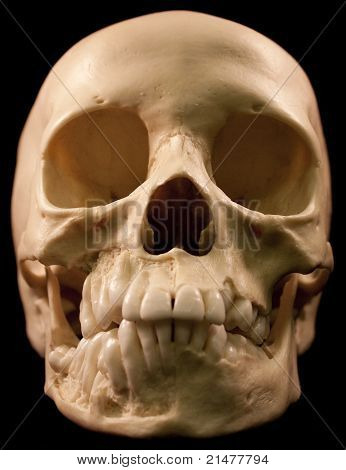 Human skull on a black background