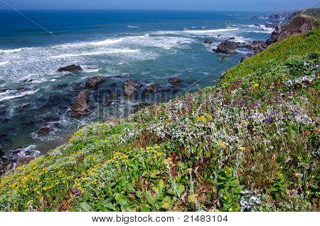 California Coast in June