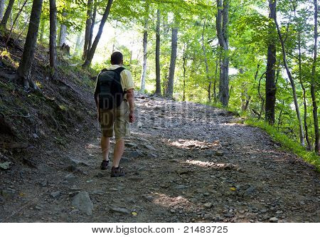 Senior Man Hiking In Forest With Backpack