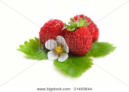Wild strawberries with green leaves and flower isolated on white
