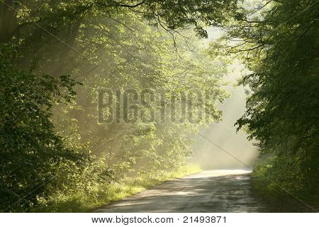 Rural road in a misty spring forest