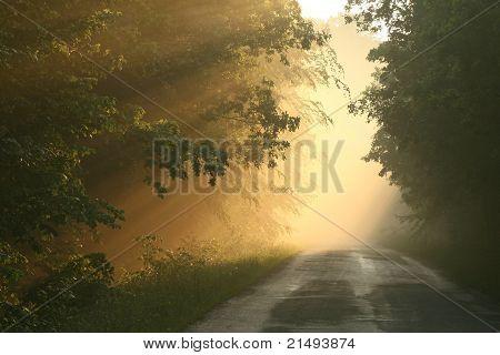 Misty spring forest at dusk