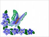 image of butterfly flowers  - Butterfly and flowers over white as a border for note cards or edging - JPG