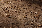 Forest Park Footpath Strewn By Dry Leaves. Autumn Evening Background. poster