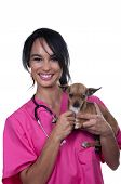 Veterinary Girl With Chihuahua Dog poster