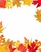 image of fall leaves  - Frame made of colorful autumn leaves on white background - JPG