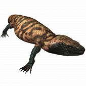 pic of gila monster  - 3 D Computer Render of an Gila Monster - JPG