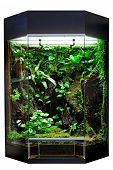 foto of terrarium  - terrarium or vivarium for keeping rainforest animal such as poison frog and lizards - JPG