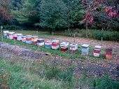 stock photo of bee keeping  - a colorful assortment of bee keeping boxes - JPG