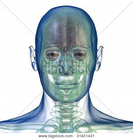 head x_ray front view