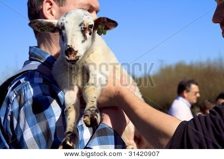 Man In Blue Shirt Holding New Born Lamb