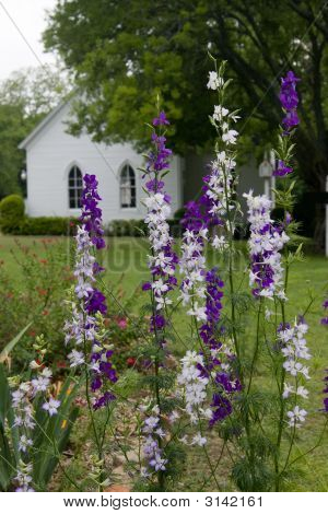 Flowers And Church