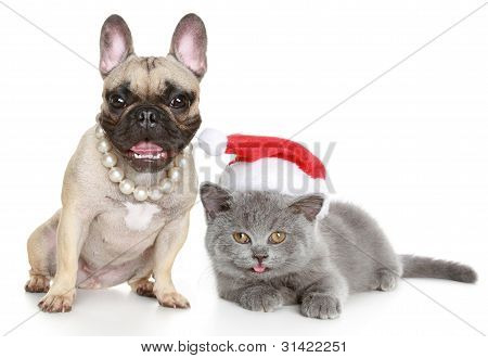 French Bulldog And Grey Kitten Lies On A White Background