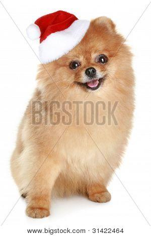 Funny Spitz-dog In Santa Red Hat