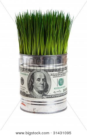 Green Grass And Dollar