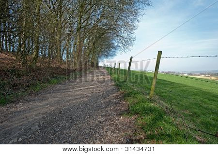 Unpaved road through forest and meadow