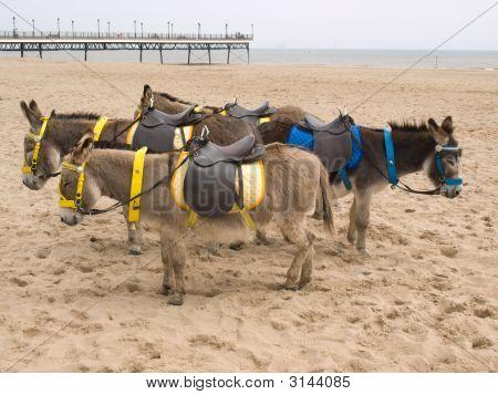 Donkeys On A Beach