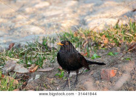 Cantankerous Bird