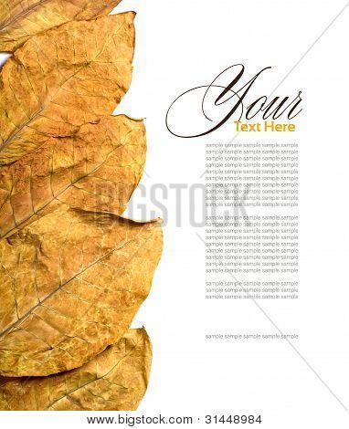 Tabak Blätter