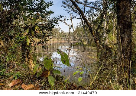 Deep Forest In Nepal Jungle (chitwan).