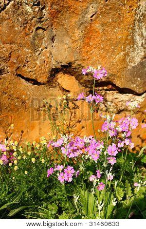 Pink Flower Background .