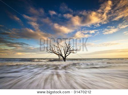 Charleston Sc Costa Botany Bay Ocean roble árbol Edisto Island