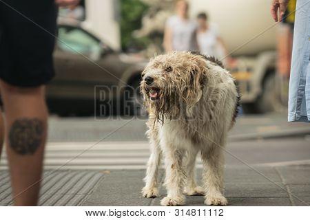 poster of Stray Dog On The Street Lost Stray Dog On Street. Close Up Of Stray Dog. Stray Dog Animal. Stray Dog