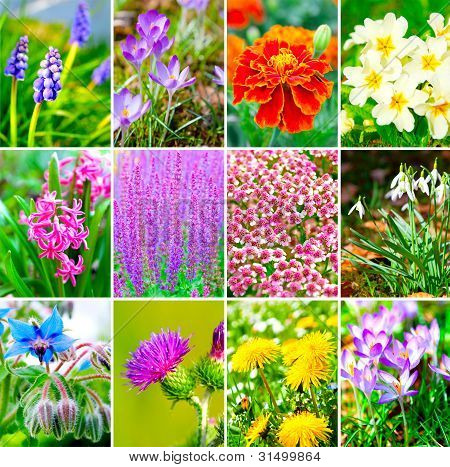 Assortment Of Spring Flowers