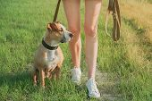 Obedient Dog Sits By The Owner At Walk. Staffordshire Terrier And A Female Person At A Field Or Park poster