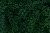 Dark Green Leaves Texture Background, Cropped Shot. Abstract Nature Background With A Lot Of Copy Sp poster