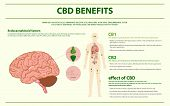 Cbd Benefits Human Horizontal Infographic, Healthcare And Medical Illustration About Cannabis poster