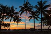 Palm Trees On Miami Beach At Sunrise In Ocean Drive, South Beach, Florida poster