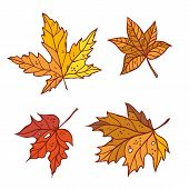 Autumn Maple Leaves Set September Or October Leaf Fall. Vector Outline Illustration Sketch Colourful poster