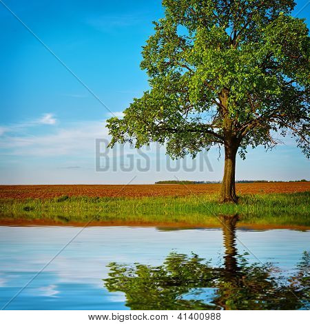 Pond With Reflection Of Tree