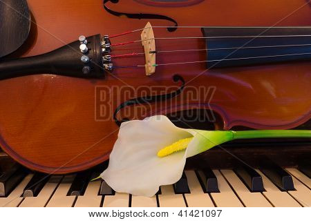 White Lily And Instruments