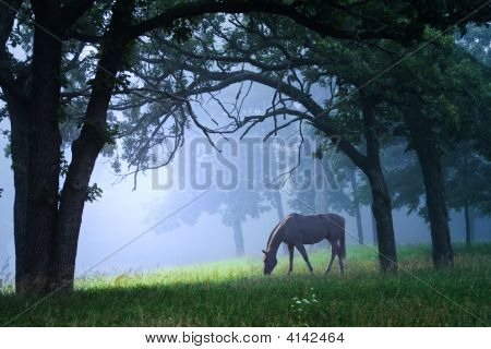 Horse In Blue Mist