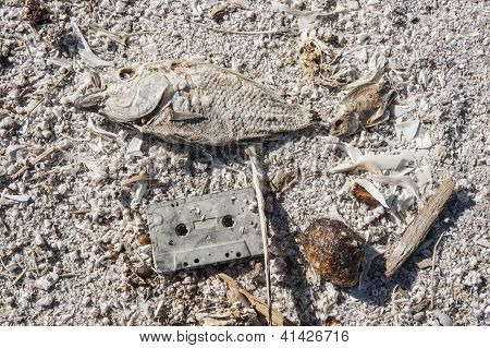 Dead fish and cassette