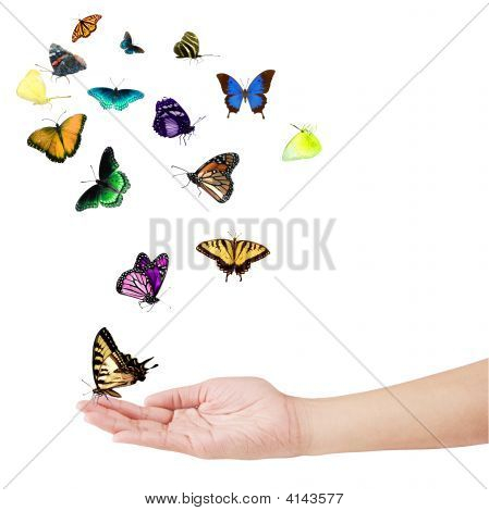 Hand And Butterflies