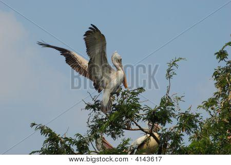 Pájaro de aterrizaje