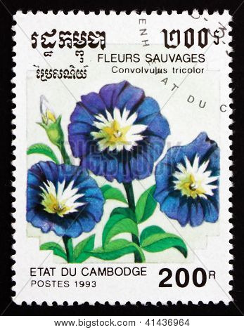 Postage Stamp Cambodia 1993 Dwarf Morning Glory, Flower
