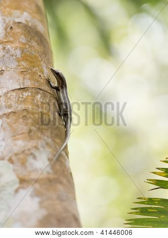 Side Shot Of An Endemic Green Gecko Of The Seychelles, Walking Down A Wooden Pillar