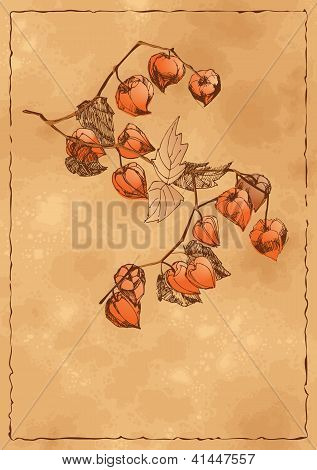 Autumn Background With Orange Physalis