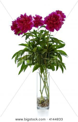 Bunch Of Pink Flowers On White, Peonies
