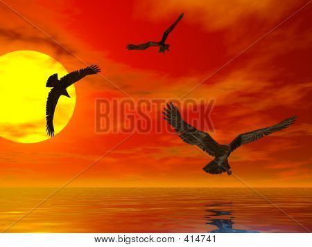 Sunset Eagles