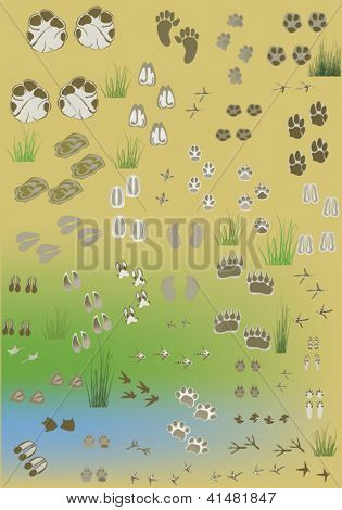 illustration with different tracks collection on light background