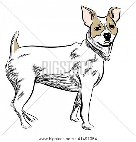 An image of a parsons jack russell terrier dog.