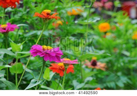 Flores roxas